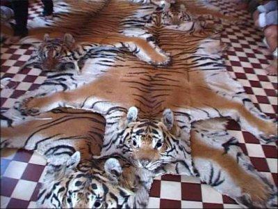Le tapis en peau de tigre la sardine lire - Tapis tout le monde bochart ...
